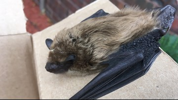 2 the Outdoors: Bat population in peril across North America