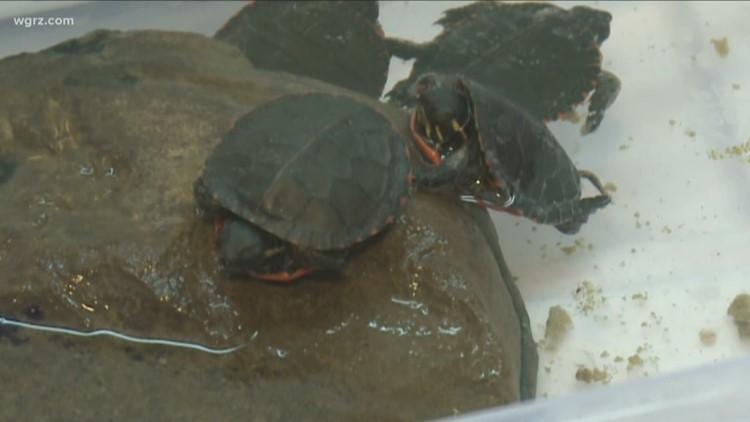 Drivers urged to 'Give Turtles a Brake'