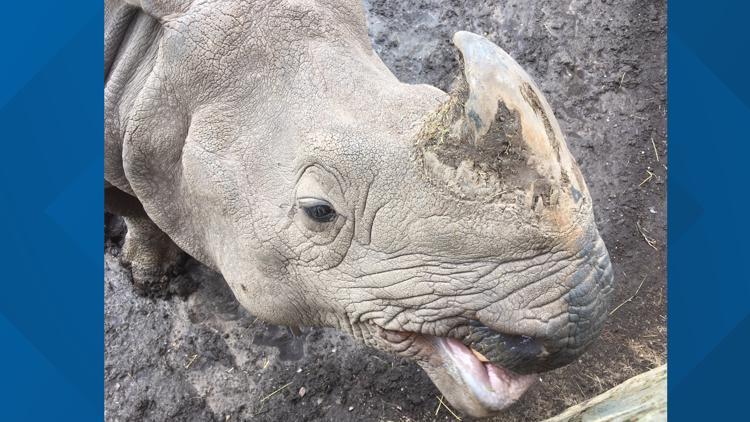 Buffalo Zoo Rhino