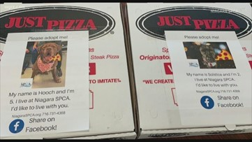 Niagara SPCA dogs find forever homes after Just Pizza promotion