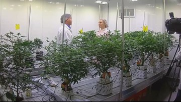 Teaching students to grow cannabis at Niagara College in Canada