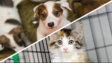 $5m in state funding designated for animal shelters
