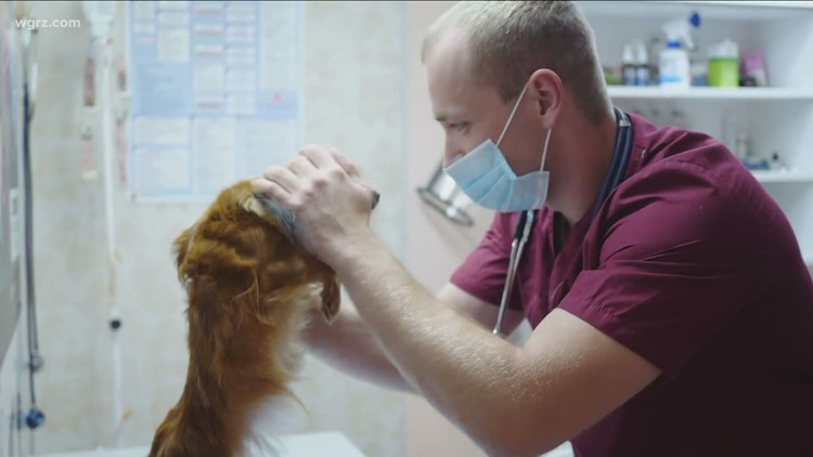 Monday Town Hall: COVID restrictions at veterinary clinics, hospitals