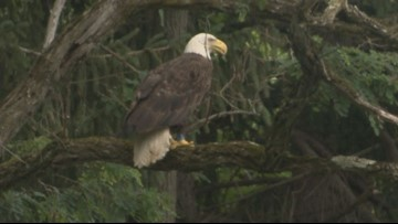 Changes proposed for New York's endangered species list