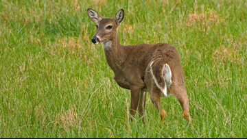 Deer, bear hunting permit deadlines approaching