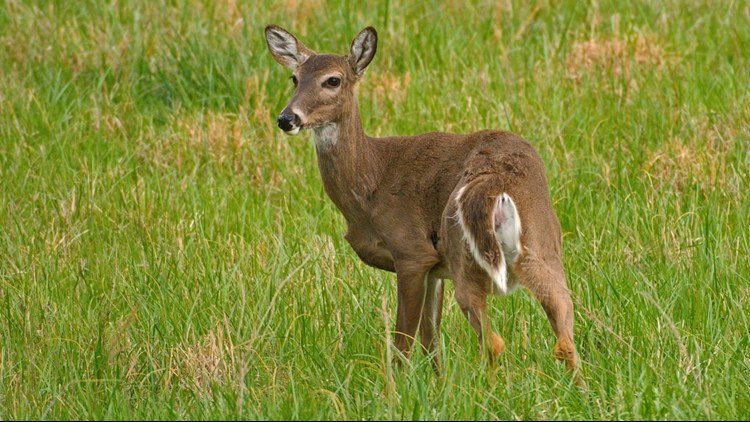 The chronic wasting disease plan was released Wednesday by the state Department of Environmental Conservation and Department of Agriculture and Markets.