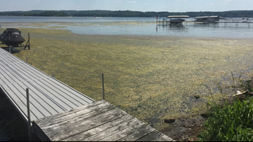 Blue-green algae: Where to look for it in Western New York