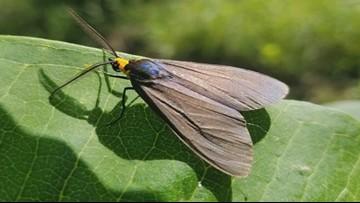 Moths: Nocturnal Beauty