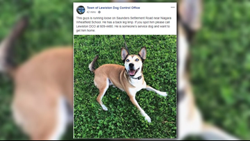 Veteran's service dog missing in WNY