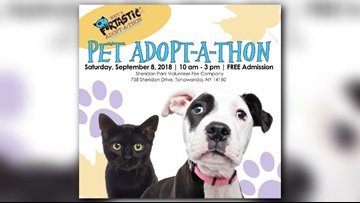 WNY's Furtastic Adopt-A-Thon event Saturday