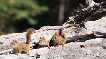 NC Wildlife: Leave the Squirrels Alone! Animals Know How to Adapt After Florence