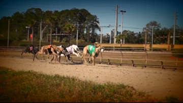 FL voters ban greyhound racing, WNY group reacts
