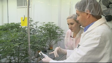 Inside the commercial cannabis lab at Niagara College