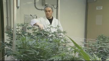 Cannabis College: Web Extras