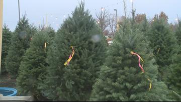 Fresh Christmas Trees.Fresh Christmas Tree Shopping Has Begun Wgrz Com