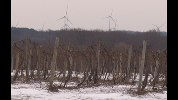 Checking Winter Grapevines, for Valentine's