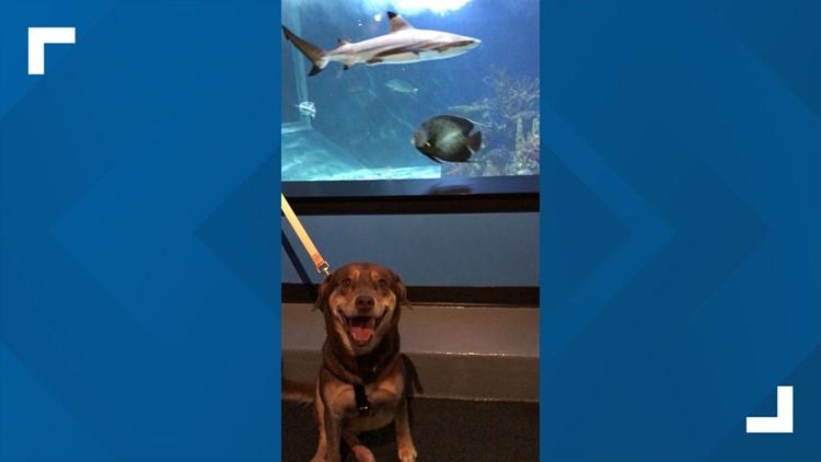 Niagara County SPCA shelter dogs visit Aquarium of Niagara