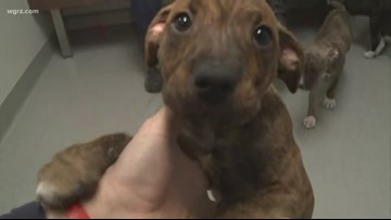 2 the Rescue: PUPPIES!