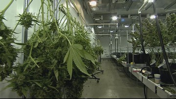 Forum held on plans for Buffalo cannabis production firm