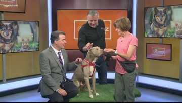 Pet of the Week: Joey the Dog