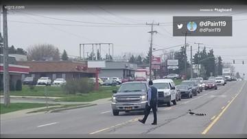 Officer helps ducklings cross the road