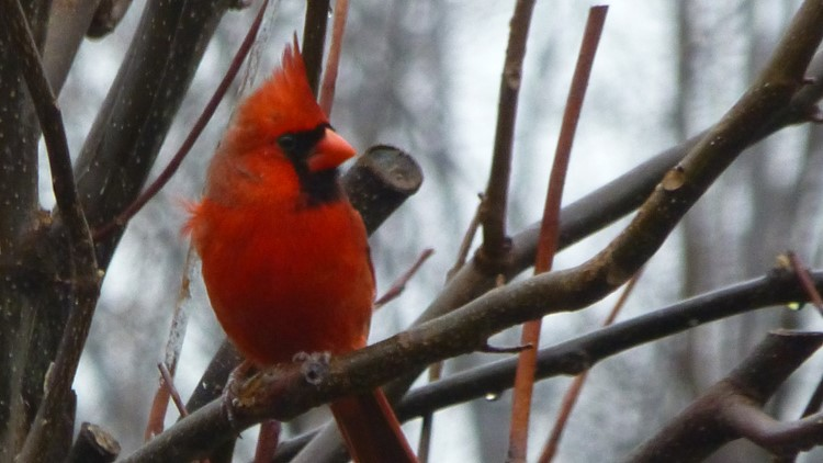 2 the Outdoors: Gardening for the birds