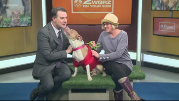 Pet of the Week: Eve from the Buffalo Animal Shelter