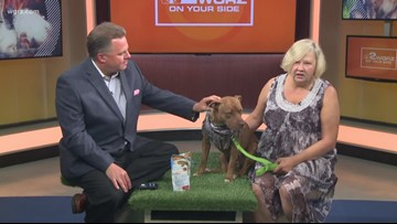 Pet of the Week: Coco