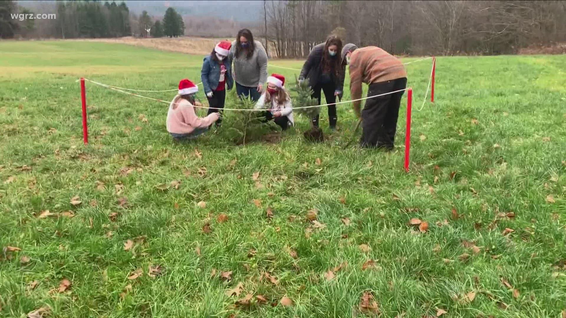 Plant-your-own Christmas tree farm opens in Boston, NY | wgrz.com