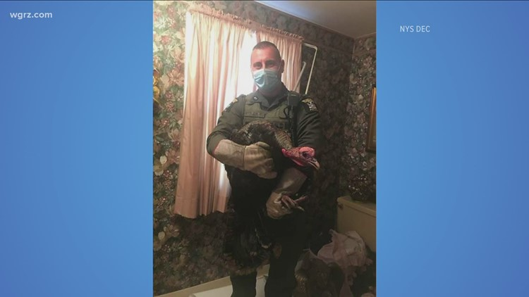 Breaking and entering: turkey causes damage in Erie County home