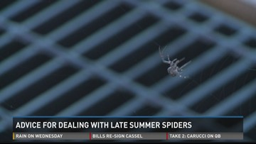 Advice for Dealing with Late Summer Spiders