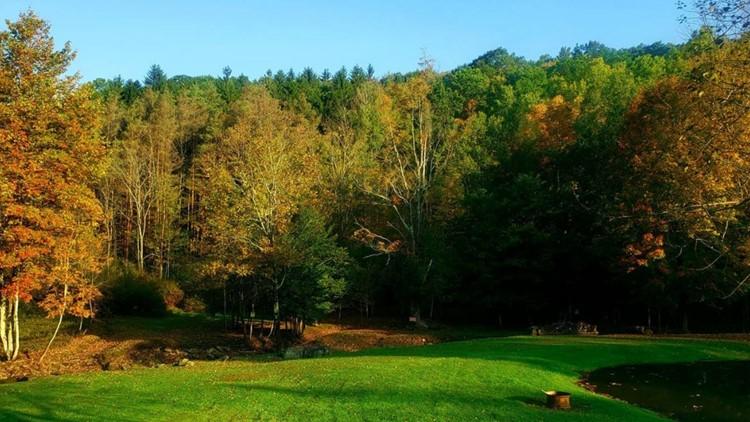 fall foliage kill buck