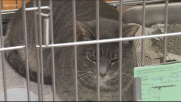 Help animals find fur-ever family during Clear the Shelters