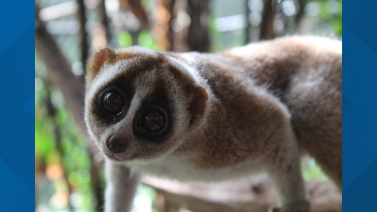 2 the Outdoors: Learning from the loris
