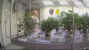 Students at Niagara College learn how to grow cannabis for the growing industry