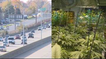 AAA releases new study on marijuana and its connection to fatal traffic crashes