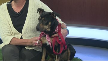 Pet of the Week: Charlie from the Buffalo Animal Shelter