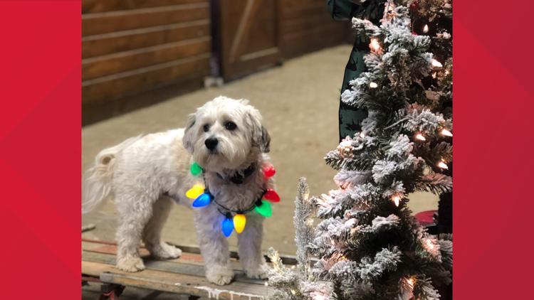 PHOTOS: Animals celebrating the holidays
