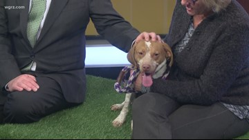 Saturday Daybreak's Pet of the Week: Baloo from the Buffalo Animal Shelter