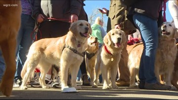 2 the Outdoors: Canine cancer research at Cornell University