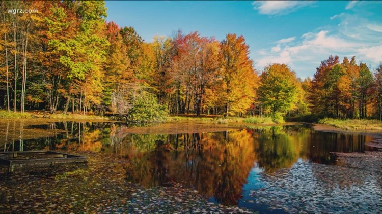 Fall foliage impacts and forecast for Western New York