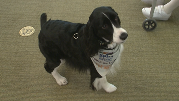 Therapy dog visits with Alzheimer's, Dementia patients in Niagara County