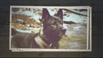 Erie Co. Sheriff's Office to retire narcotics K9 officers due to potential cannabis legalization