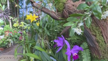 Buffalo and Erie County Botanical Gardens hosts Orchids Under the Dome