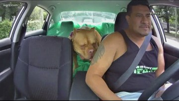 Study:Dogs In Cars Lead To Bad Behaviors