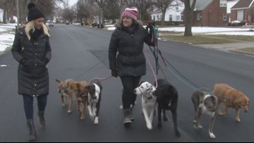 Not just a dog walker: meet the gentle human and real boss behind 716 Dog Pack