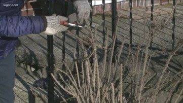 2 the Garden: Spring cleanup