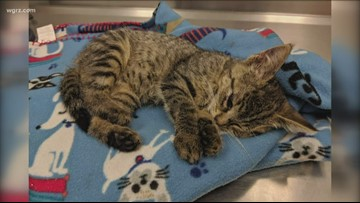 Cat Euthanized After Being Thrown From Car