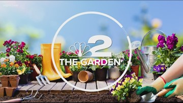 2 The Garden: Peppers and Tomatoes