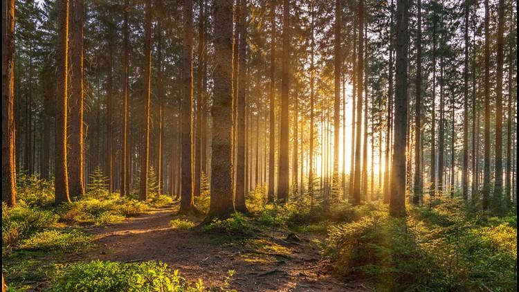 Haunted Woods Walk returns